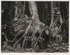 The Strangler (Strangling sub tropical flora and fauna of Florida's Everglades)
