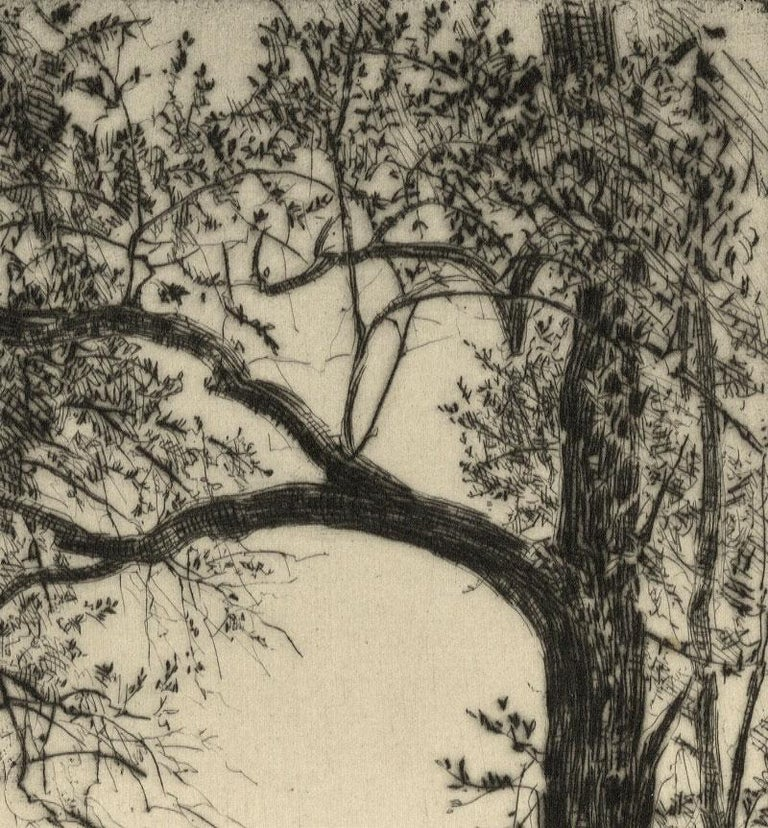 Olive Trees (Lovely landscape in Europe dominated by hills and olive trees) - American Realist Print by Earl Stetson Crawford