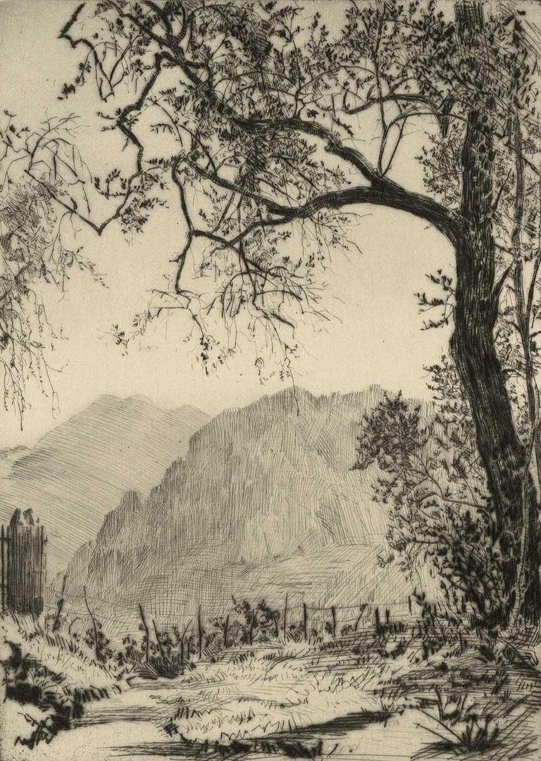 Earl Stetson Crawford Landscape Print - Olive Trees (Lovely landscape in Europe dominated by hills and olive trees)