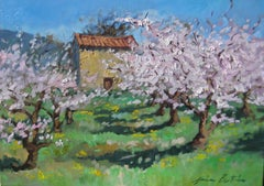 Contemporary Impressionist Oil Painting Of Apricot Blossoms in Provence