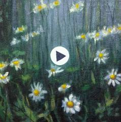 THIS IS NOT A VIDEO OF DAISIES GROWING