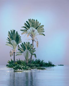 Traveller Palms