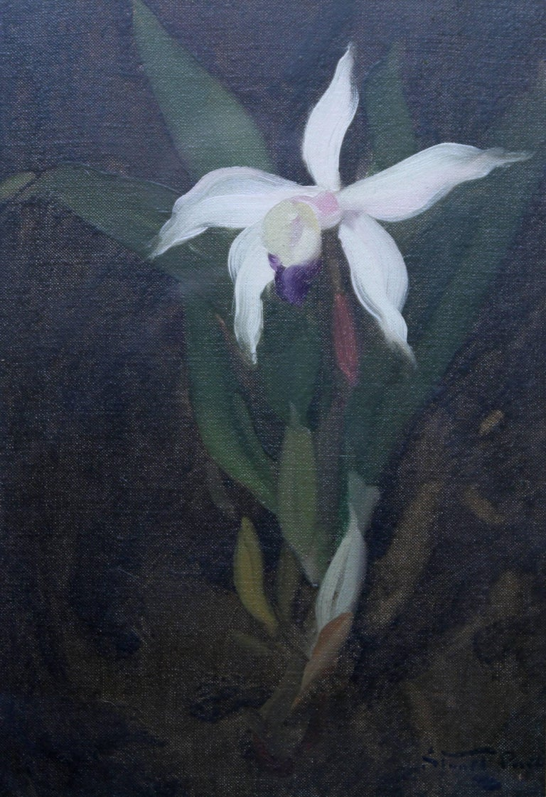 James Stuart Park Orchid Scottish Glasgow Boys Floral Still Life