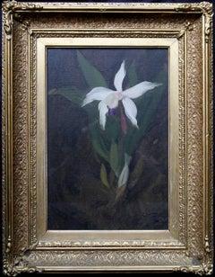 Orchid - Scottish Glasgow Boy 19thC art Scottish floral still life oil painting