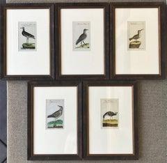 """Small Birds"""