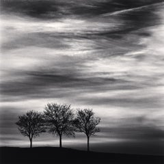 Three Trees at Dusk, Fain Les Moutiers, Bourgogne, France, 2013
