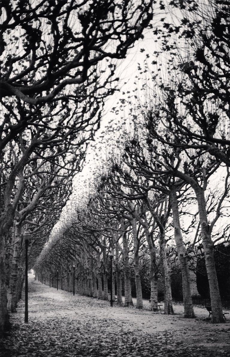 Michael Kenna Black and White Photograph - Jardin De Plantes, Study 1, Paris, France, 1988