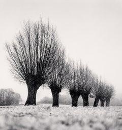 Seven Pollarded Trees, Chapaize, Bourgogne, France, 1998 - Michael Kenna
