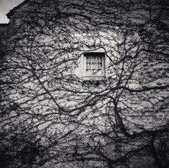 Window and Vines, Abbaye De Fontenay, Bourgogne, France, 2013 - Michael Kenna