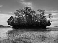 BAOBAB TREES ON A MUSHROOM ISLAND IN THE BAY OF MORAMBA, MADAGASCAR, 2010