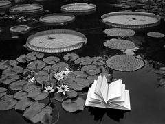 Lecciones de Botanica, Switzerland, 1997