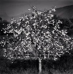 Persimmon Tree, Sulmona, Abruzzo, Italy, 2015 - Landscape Photography