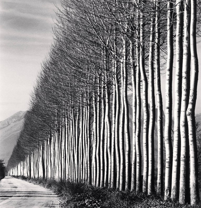 Michael Kenna Black and White Photograph - Poplar Trees, Fucino, Abruzzo, Italy, 2016 - Landscape Photography