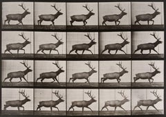 Animal Locomotion: Plate 692 (Stag Running), 1887