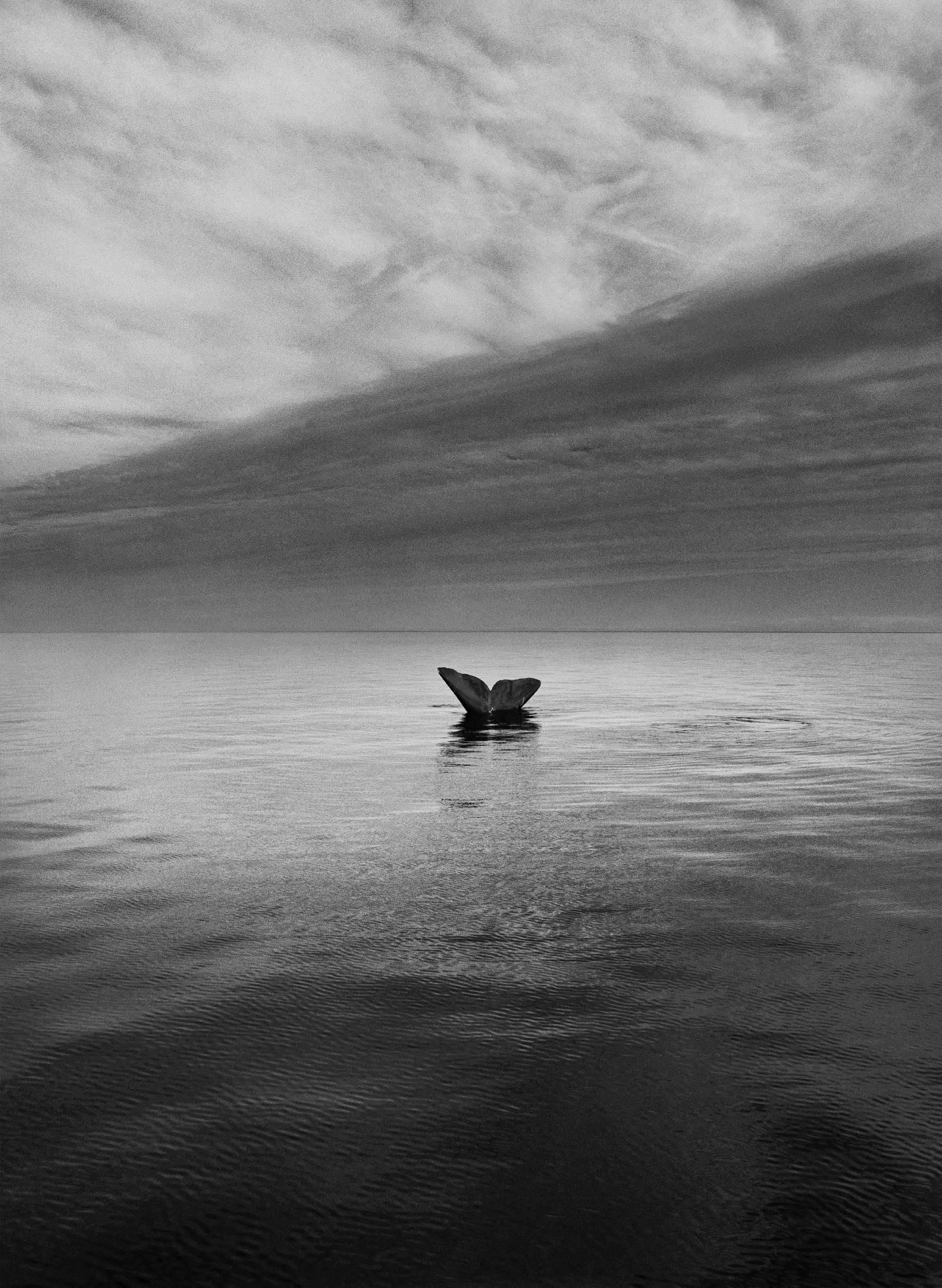 Southern Right Whale Tail, Valdes Peninsula, Argentina, 2004 - Sebastião Salgado