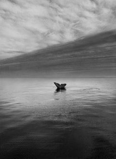 Southern Right Whale Tail, Valdes Peninsula, Argentina, 2004