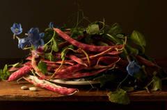 Cranberry Beans, After GG