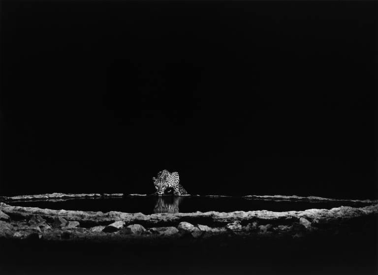 Sebastião Salgado Black and White Photograph - A Leopard in the Barab River Valley, Damaraland, Namibia, 2005