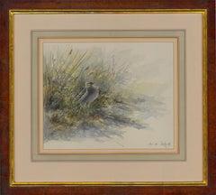 David Daly SWLA - 1992 Watercolour, Great Snipe Displaying