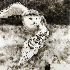 Smoky Owl