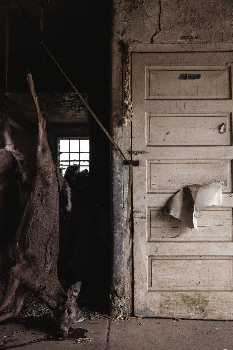 Josephine Douet Still-Life Photograph - Young Deer
