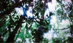 Jungle v.1