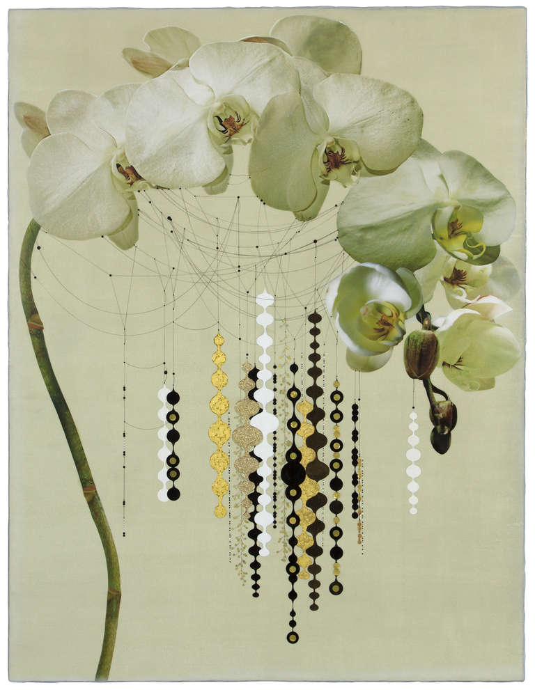 White Orchid #101