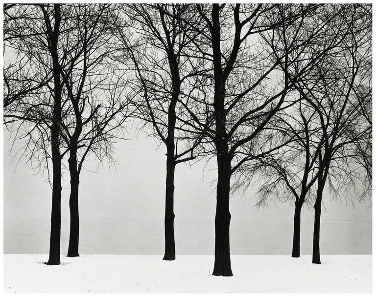 Chicago (Trees at Lake Shore)