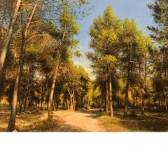 LANDSCAPE, PINE TREES, MEDITERRANEAN FOREST