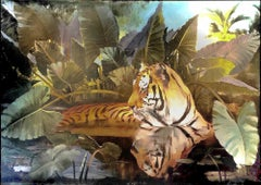 Bengal Tiger in Marsh - Original oil on canvas - 78 x 113 in.