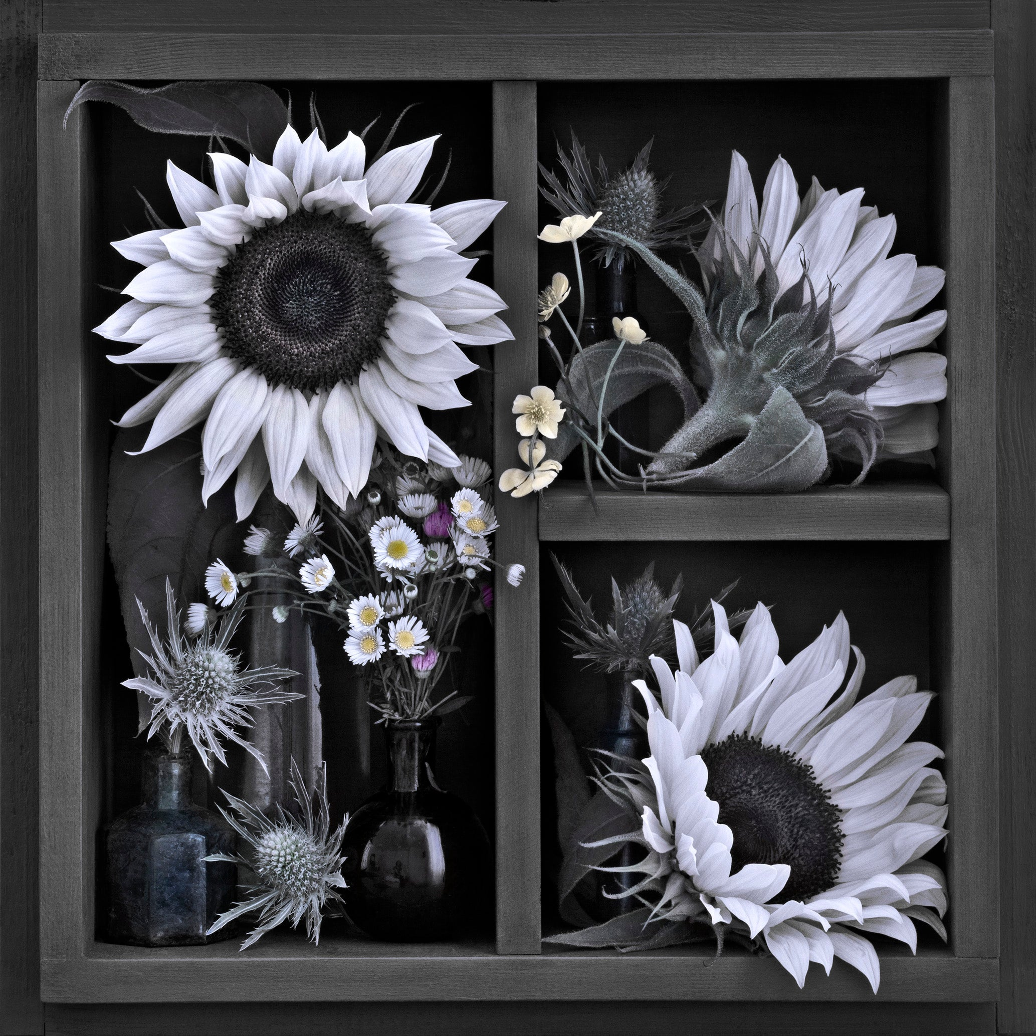 Alexandra Catiere Black And White Still Life Photography Picture