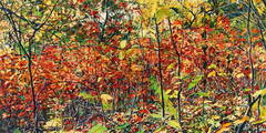 Thicket 26 by Jeffrey Vaughn, Impressionist Style Oil Landscape Painting, 2010