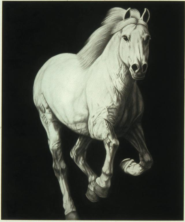"""Galloping Horse #22"", Graphite Drawing on Canvas"