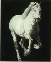 Galloping Horse, Large Scale Charcoal Drawing on Canvas, Animal, Graphite