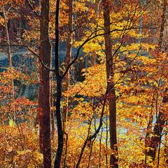 "Jeffrey Vaughn - ""Thicket Number 42: Innsbrook"", Landscape Oil Painting on Canvas, Framed"