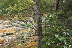 Jeffrey Vaughn - Flowering Dogwood Rocky Stream