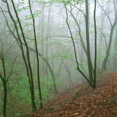 Ravine in Fog by Jeffrey Vaughn, Archival Inkjet Print on Aluminum