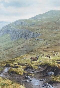 Study of deer on a highland hillside