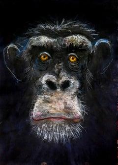 Chimpanzee - New Animal Study By John Graham