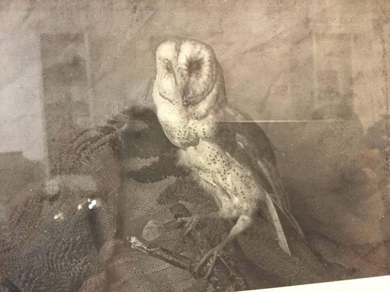 American Photograph of a Barn Owl For Sale