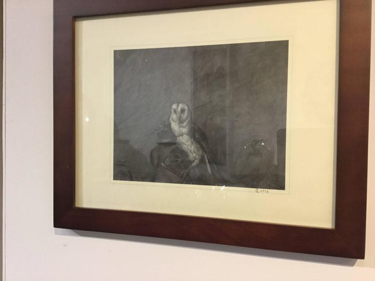 Photograph of a Barn Owl In Excellent Condition For Sale In Hudson, NY