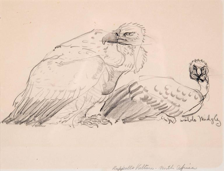A study of two vultures, signed bottom right