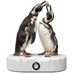 Couple of Fine Taxidermy Magellanic Penguins by Sinke & Van Tongeren