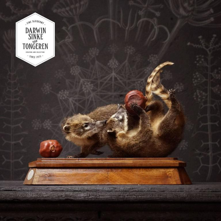 A cute artwork with two young Ring-tailed Coatis (Nasua nasua) playing with a piece of fruit. Set on a wooden plinth.  This object is currently on display at JAMB, Pimlico Rd, London.  Note: None of our animals have been taken from the wild. All