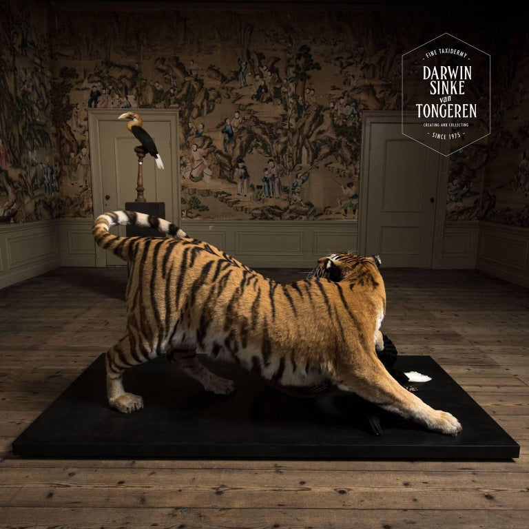 Dutch Tiger and Hornbill from Exhibition Tier at Moa by Sinke & Van Tongeren For Sale