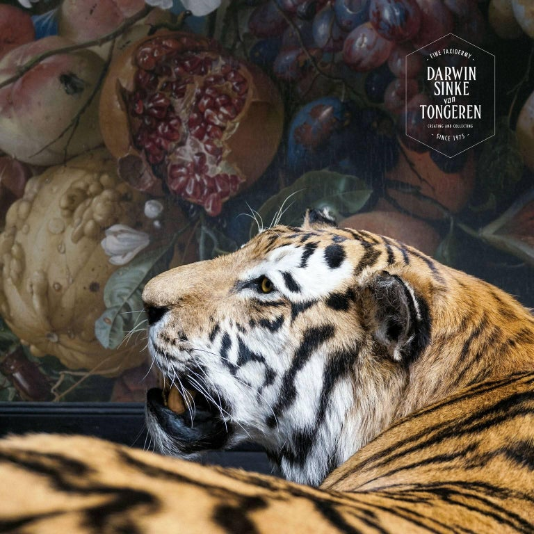 Tiger and Hornbill from Exhibition Tier at Moa by Sinke & Van Tongeren For Sale 5