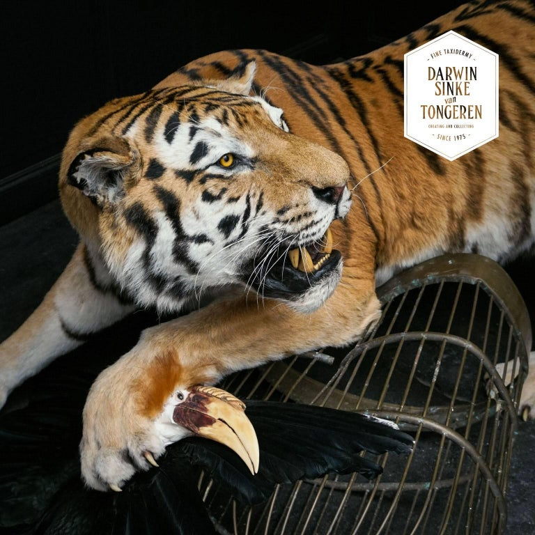 Tiger and Hornbill from Exhibition Tier at Moa by Sinke & Van Tongeren For Sale 1