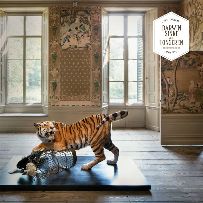 Tiger and Hornbill from Exhibition Tier at Moa by Sinke & Van Tongeren For Sale 3