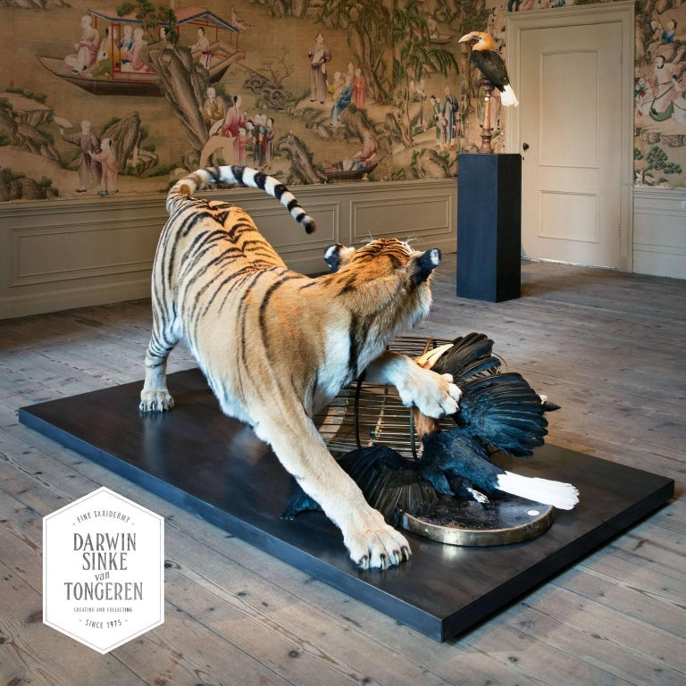 Tiger and Hornbill from Exhibition Tier at Moa by Sinke & Van Tongeren For Sale 4