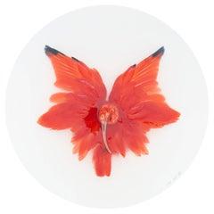Art Print Titled 'Unknown Pose by Scarlet Ibis II' by Sinke & Van Tongeren